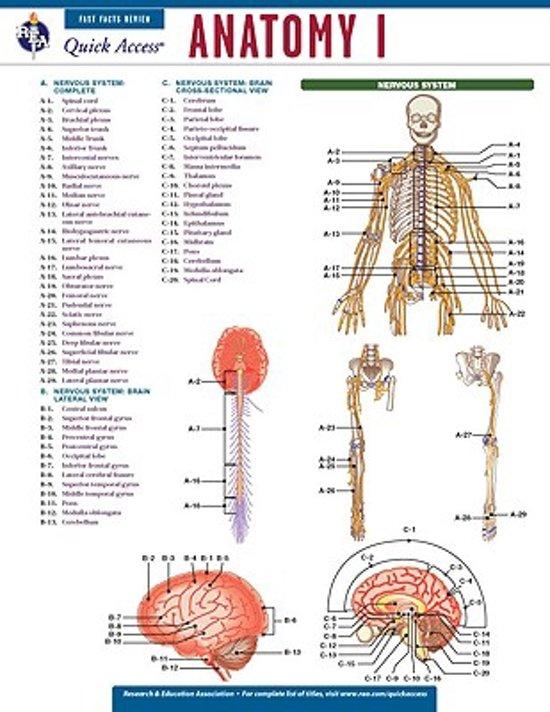 Anatomy I in Looperskapelle