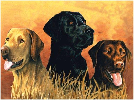 Schilderen Op Nummer - Honden