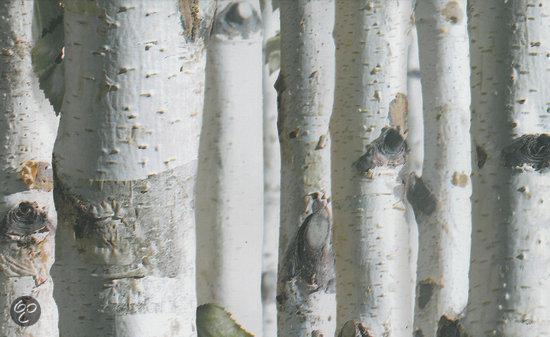 Dutch wallcoverings vliesbehang berkenbomen for Wat is vliesbehang