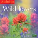 Audubon Wildflowers