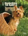 Yorkshire Terriers 2016 Desk Diary