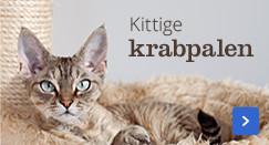 Alles voor je kitten