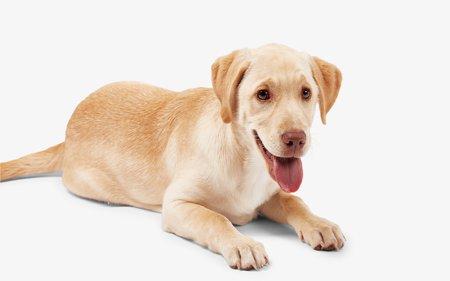 Honden artikelen
