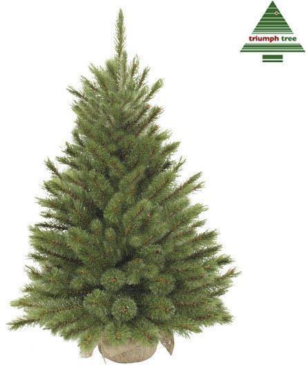 bol.com | Triumph Tree Forest Frosted Pine - Kunstkerstboom 90 cm ...