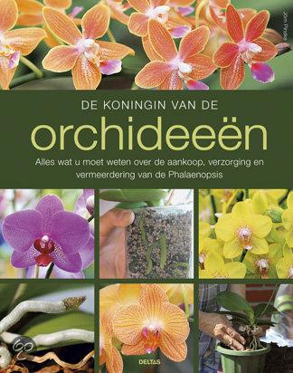 De koningin van de orchideeen