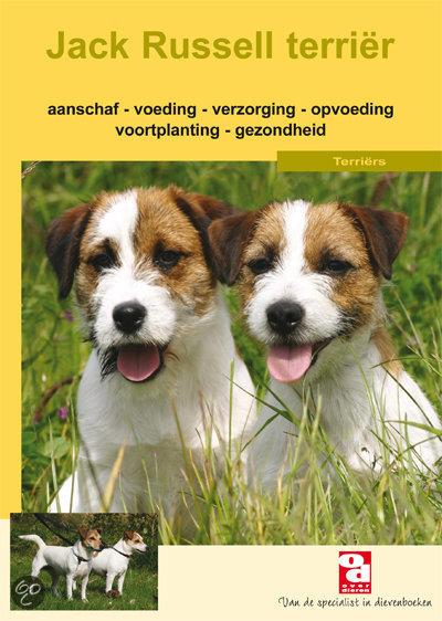 De Jack Russell Terrier