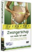 Zwangerschap Van Week Tot