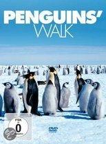 Penguin's Walk