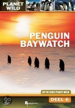 Penguin Baywatch - Planet Wild