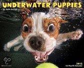 Underwater Puppies Calendar