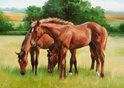 Ravensburger Puzzel - Grazende Paarden
