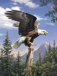 Schilderen op nummer EAGLE