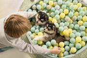 Van puppy ballenbad tot bijtspeelgoed, met Beeztees is jouw huis puppy-klaar!