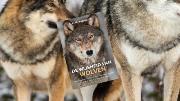 """De Wijsheid Van Wolven: """"In een wolvenfamilie is de leiderwolvin de roedelleider."""""""