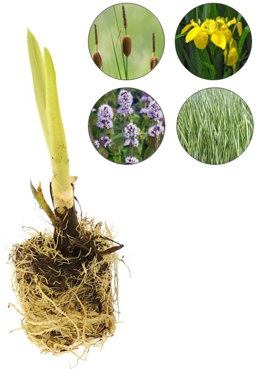 Waterworld Waterplanten Helofytenfilter XL - Natuurlijke Waterzuivering - Ca. 4m³ - 48 Waterplanten