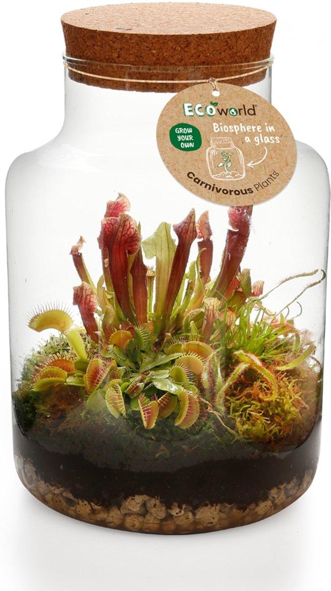 Ecoworld Swamp Biosphere - Basic Glas XL - Eco-Systeem - 3 Vleesetende Planten + Complete DIY set kopen