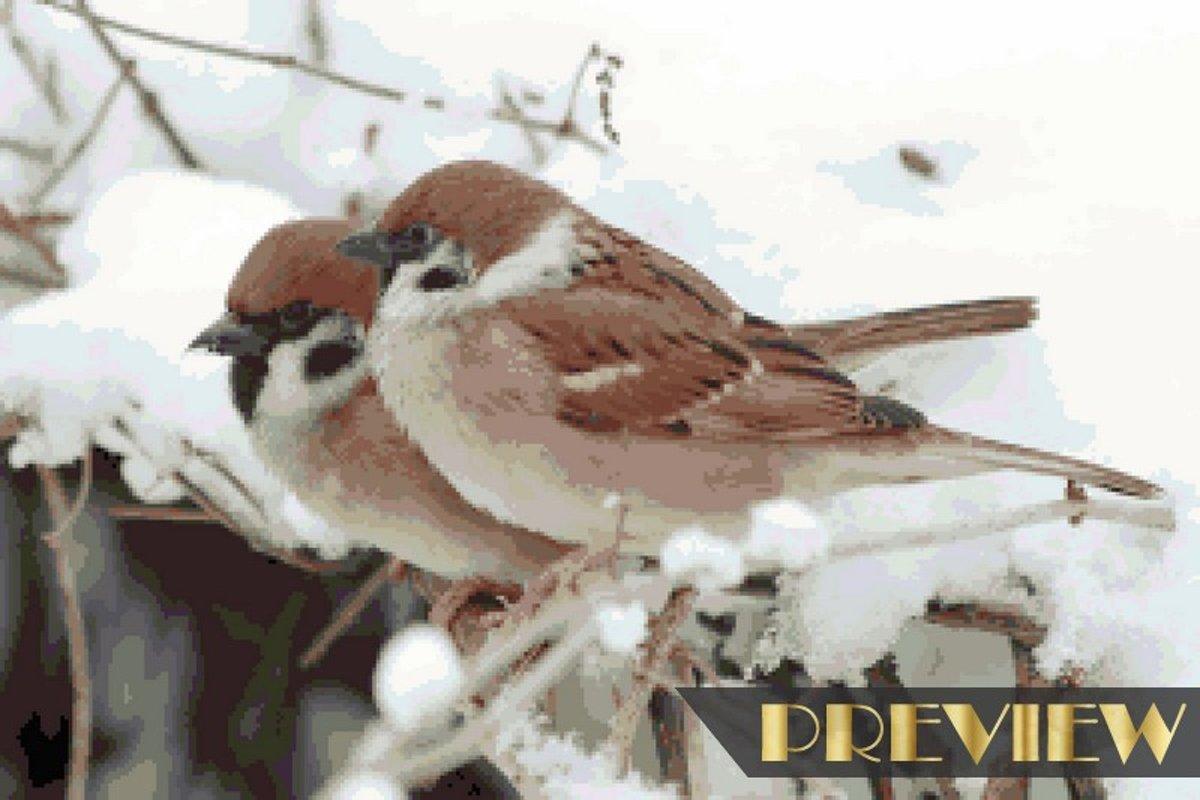 Diamond Painting pakket volwassenen   Musjes in de sneeuw - 50 x 75 cm   Volledige bedekking met vierkante steentjes   FULL   DP Diamond Paintings