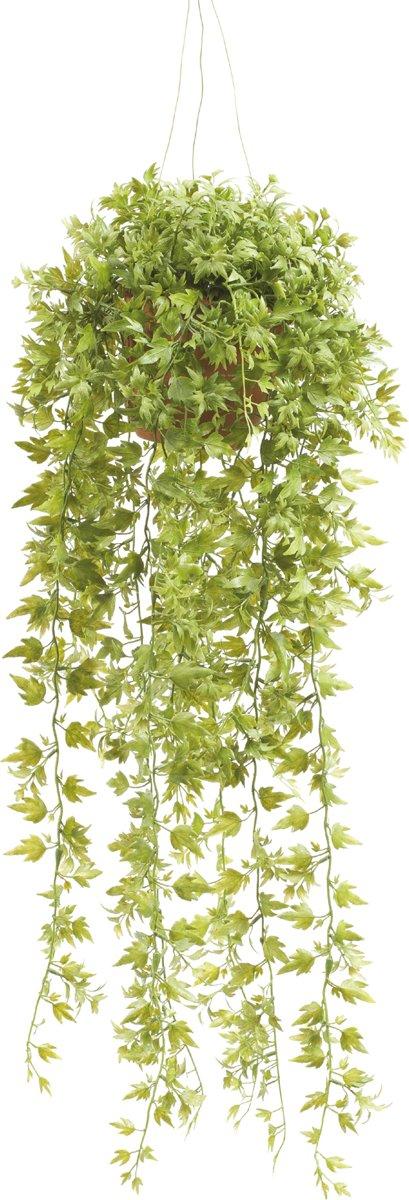 Emerald - Ivy Hangplant - In pot - 50 cm - Groen kopen