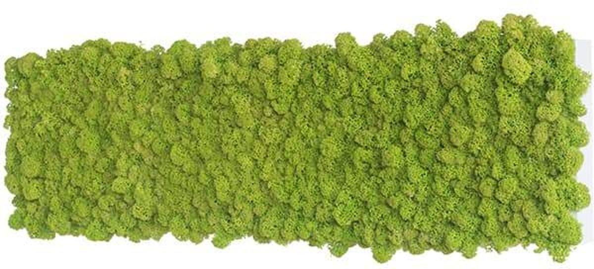 reindeer moss picture 70 x 20 CM voorjaar