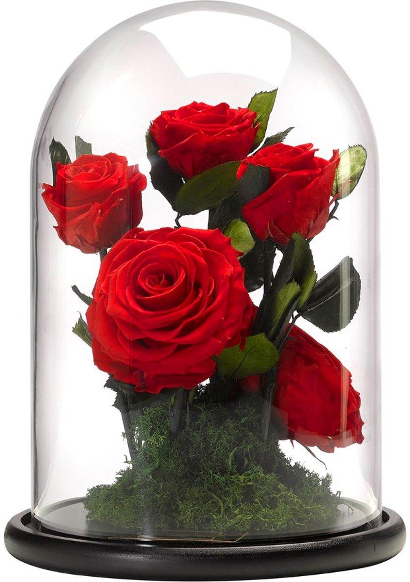 Belle en het Beest Enchanted Rose Fairy Garden kopen