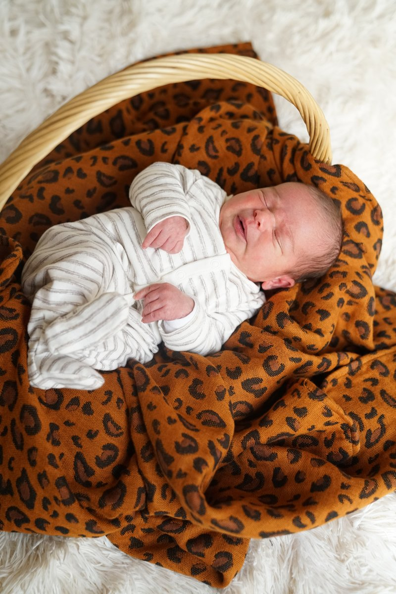 Kokadi Babydeken Safari kopen