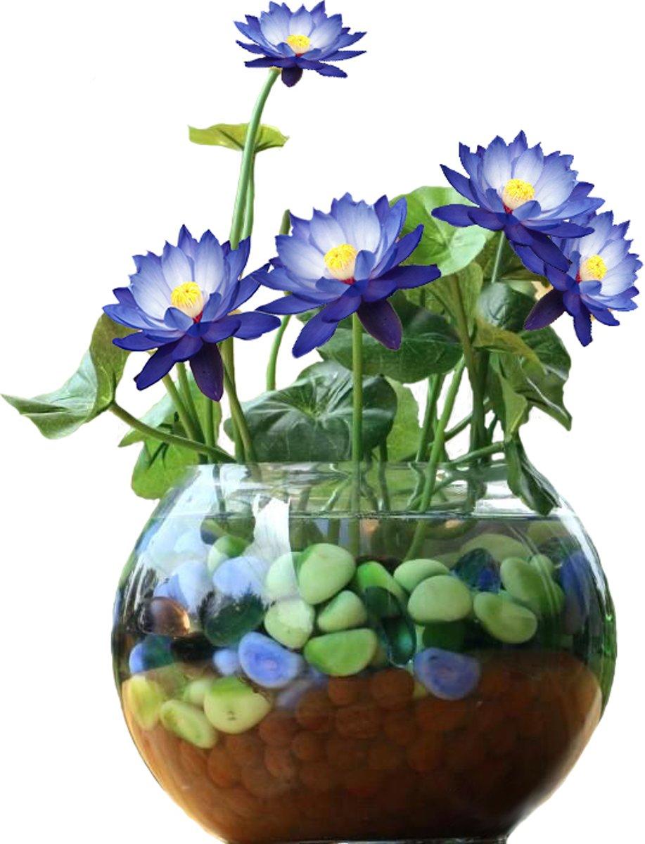 Blauwe Lotus Set DIY. Leuk Cadeau Moederdag Verjaardag kantoor Plant