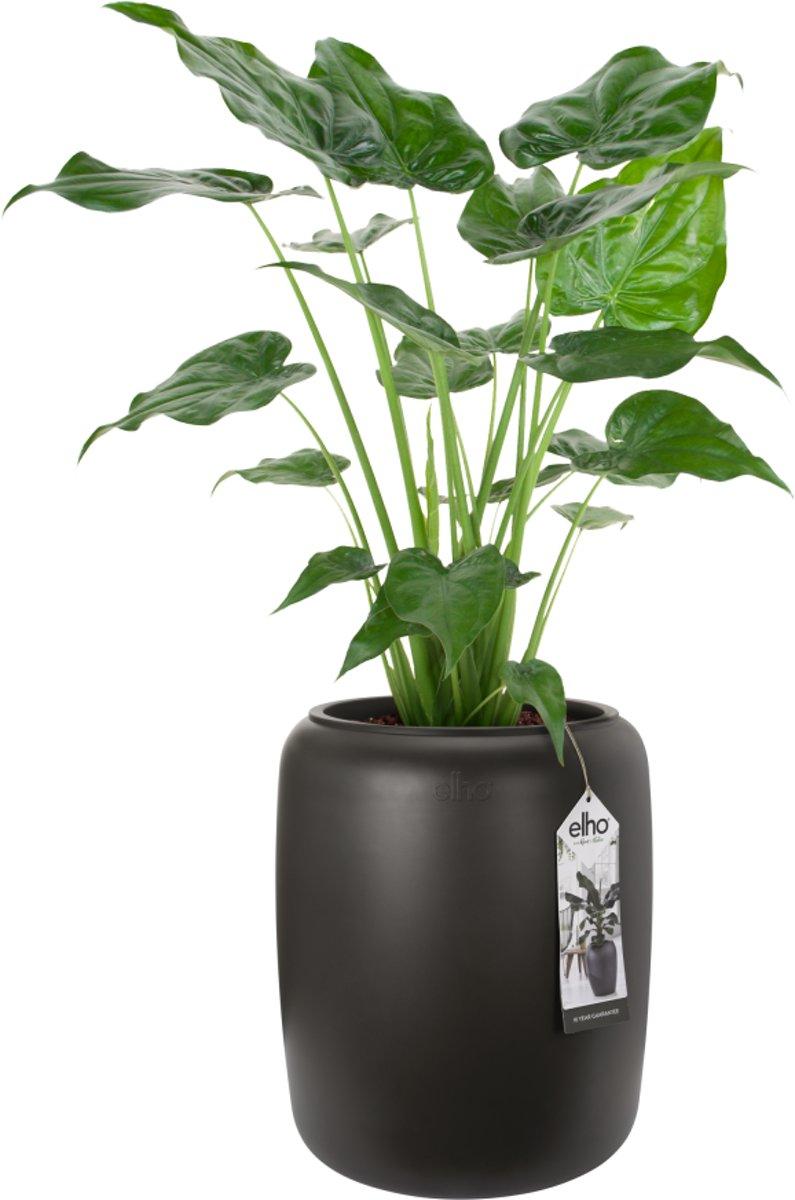 Elho Pure Beads Medium 40 - Plantenbak - Walnootbruin - Binnen & Buiten  - L 39.2 x W 39.2 x H 47.6 cm kopen