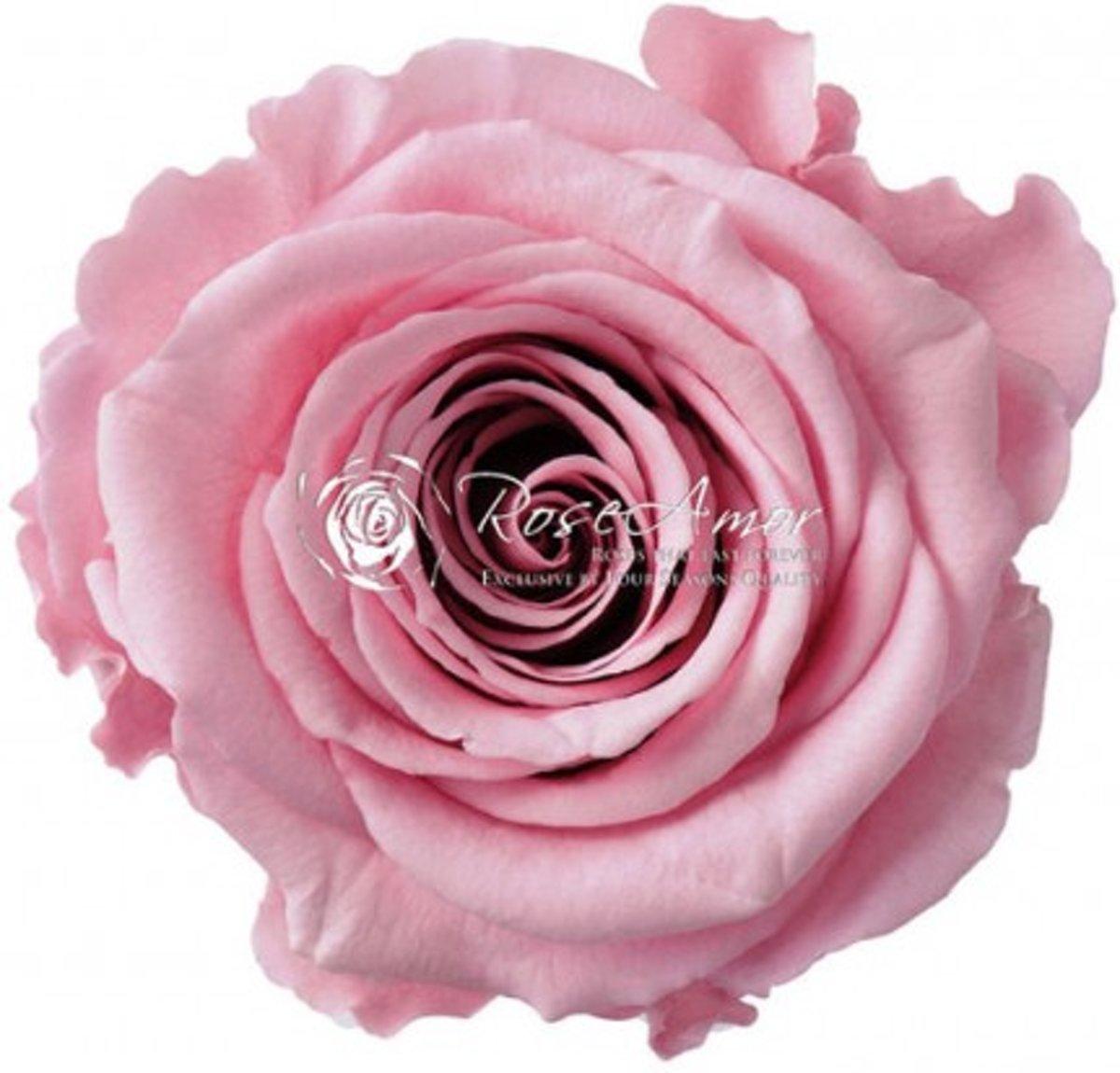Geconserveerde longlife roze rozen (6 stuks)