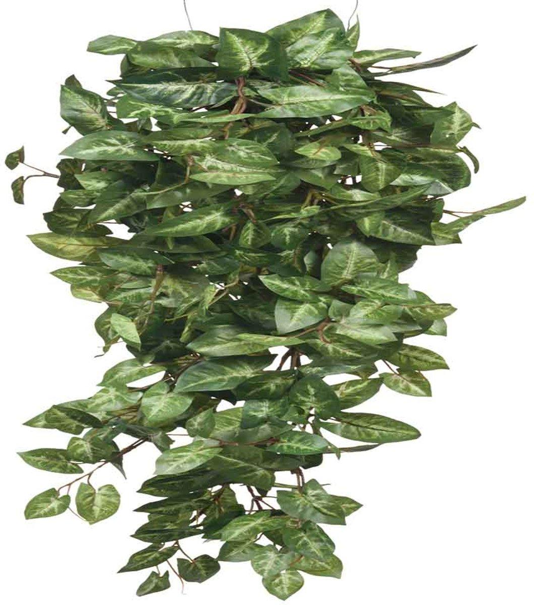 Mica Decorations fittonia hangend groen maat in cm: 80 x 30 x 15 kopen
