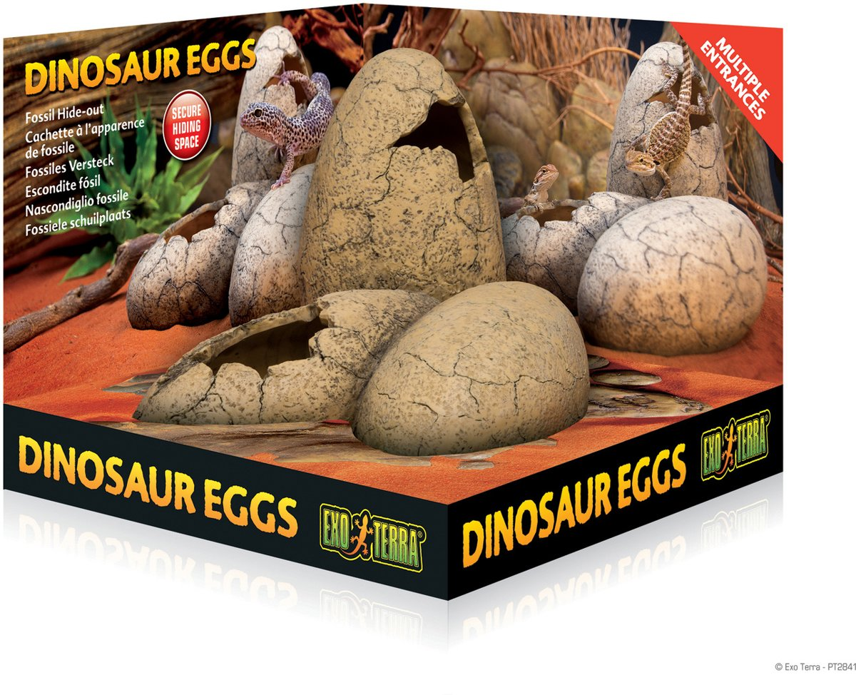 Fossil Hide-out Dinosauer eggs