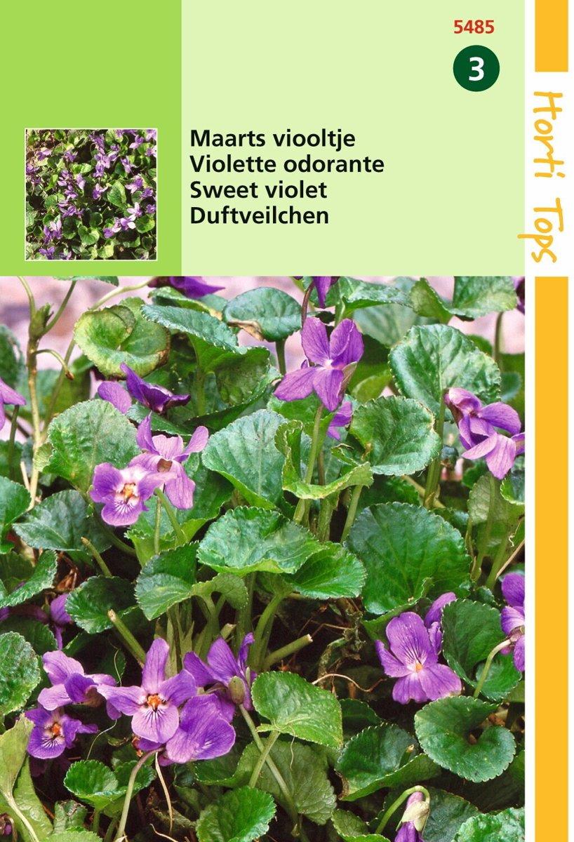2 stuks Hortitops Viola Odorata Maarts Viooltje