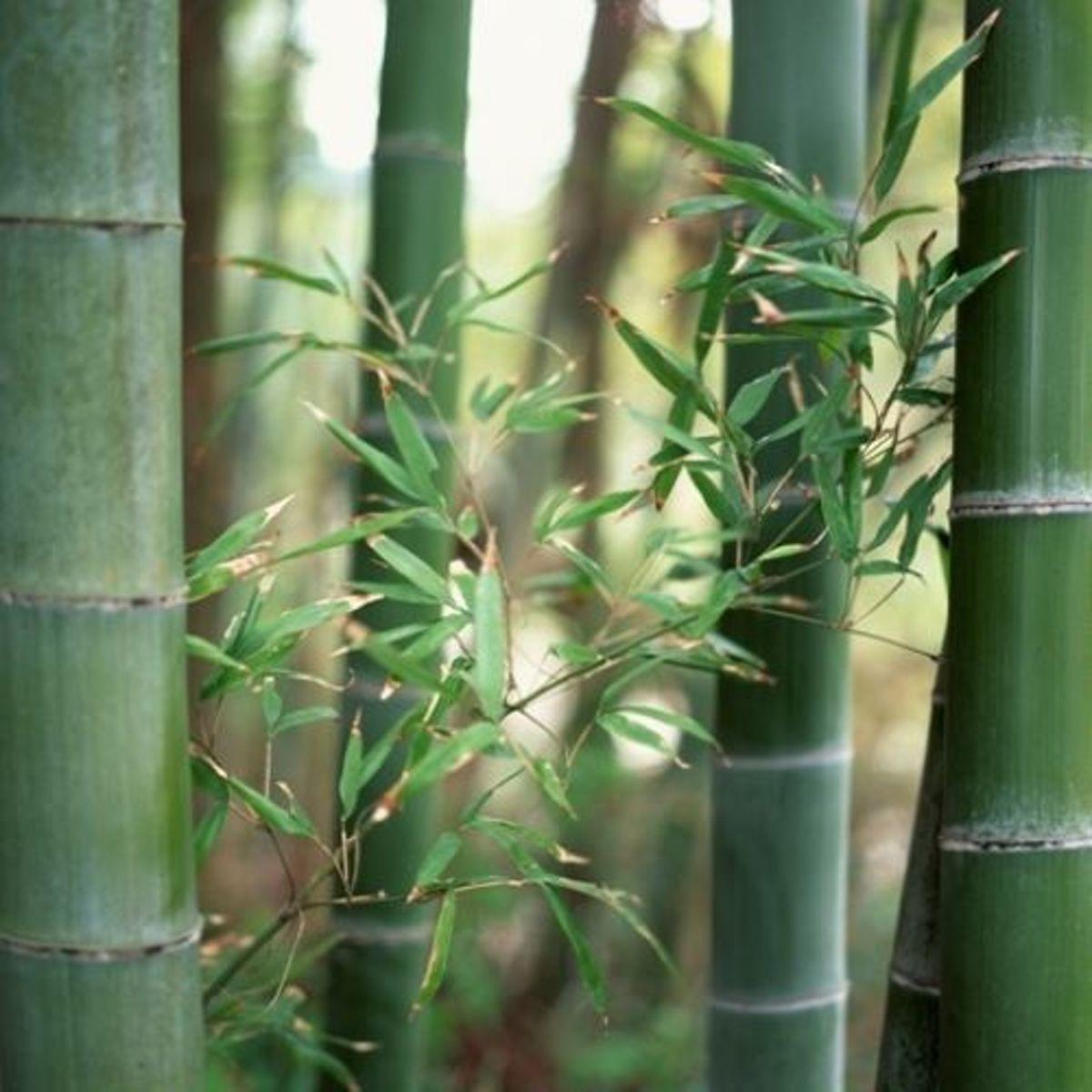 Tuindoeken – Tuinschermen  –  Schuttingsdoeken – Afscherming – Inclusief Montageset – 150cm x 210cm – Bamboe