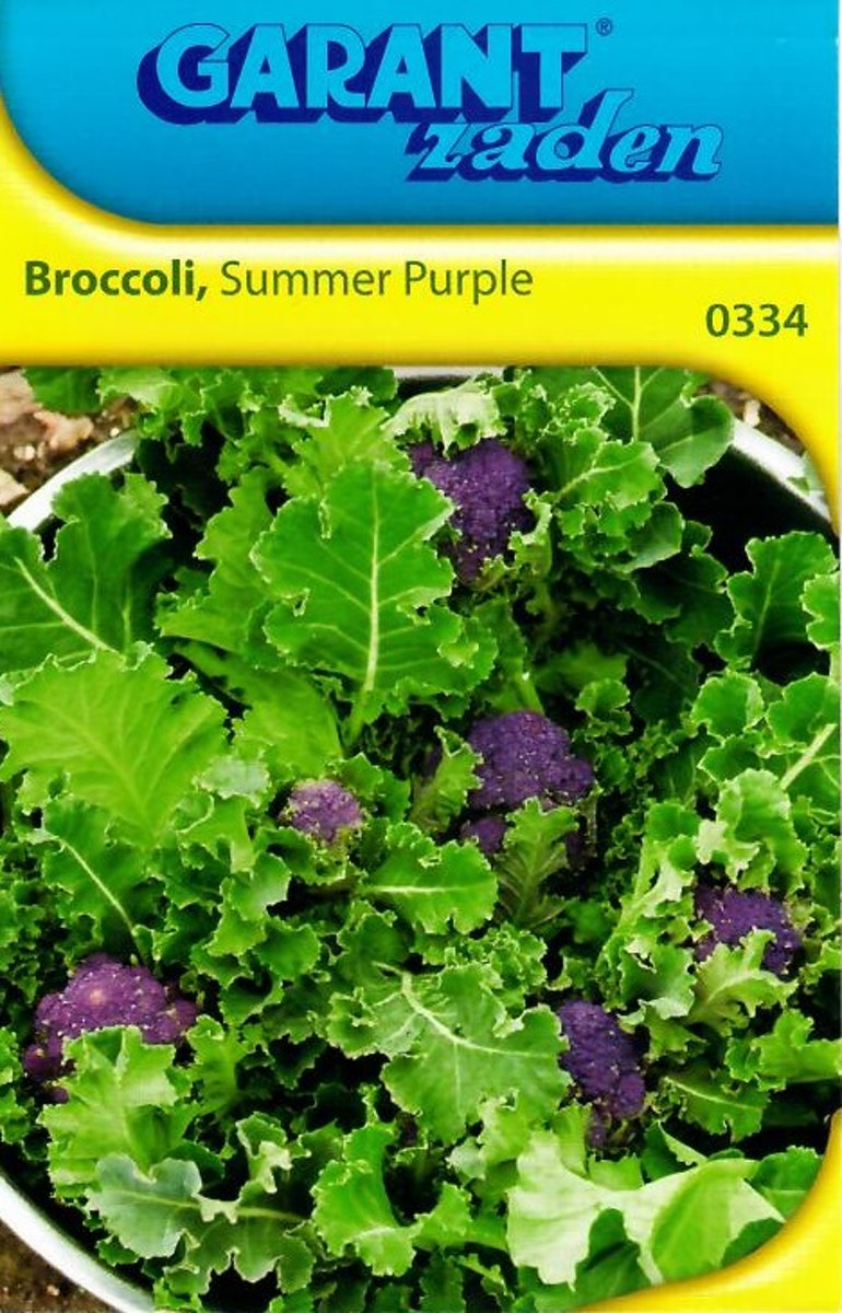 BROCCOLI SUMMER PURPLE (ASPERGEBROCCOLI)