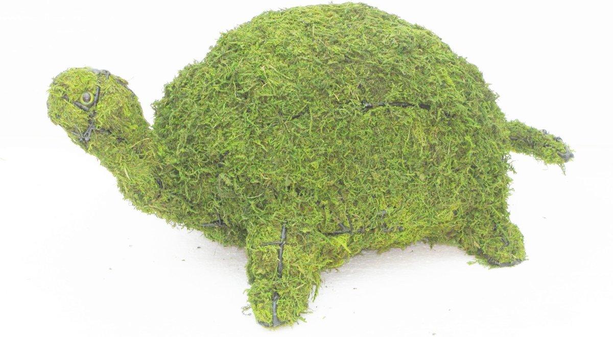 Tuinbeeld -  Schildpad - Mos
