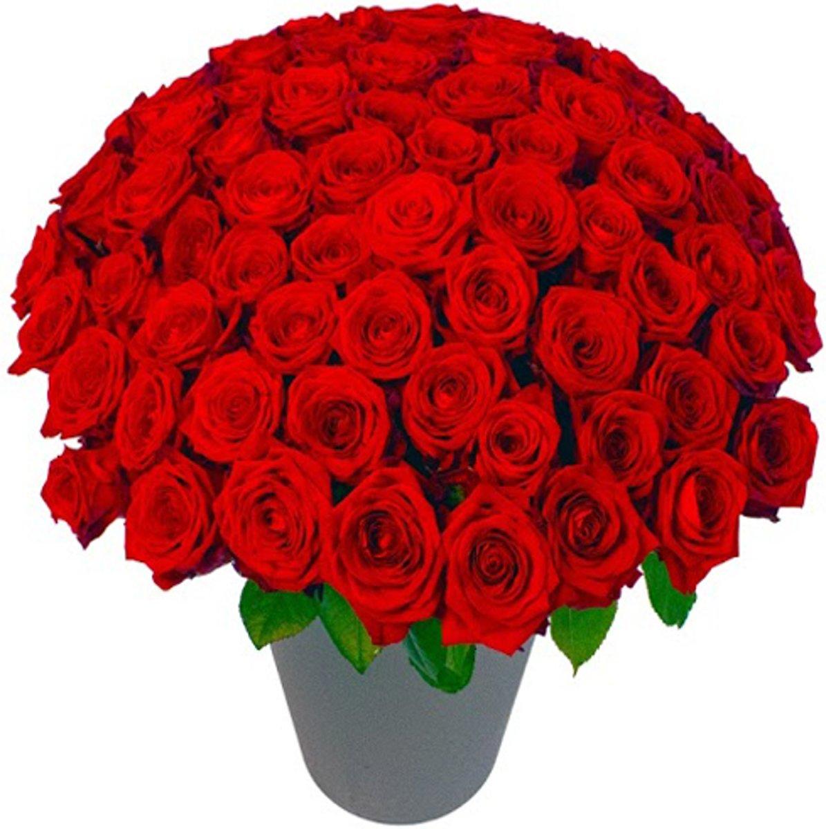 85 rode rozen in vaas kopen