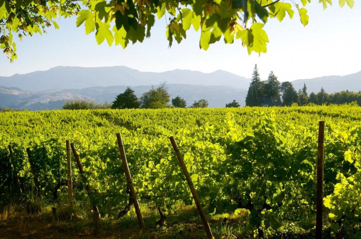 Tuinposter | Tuindoek - Wijngaard kopen