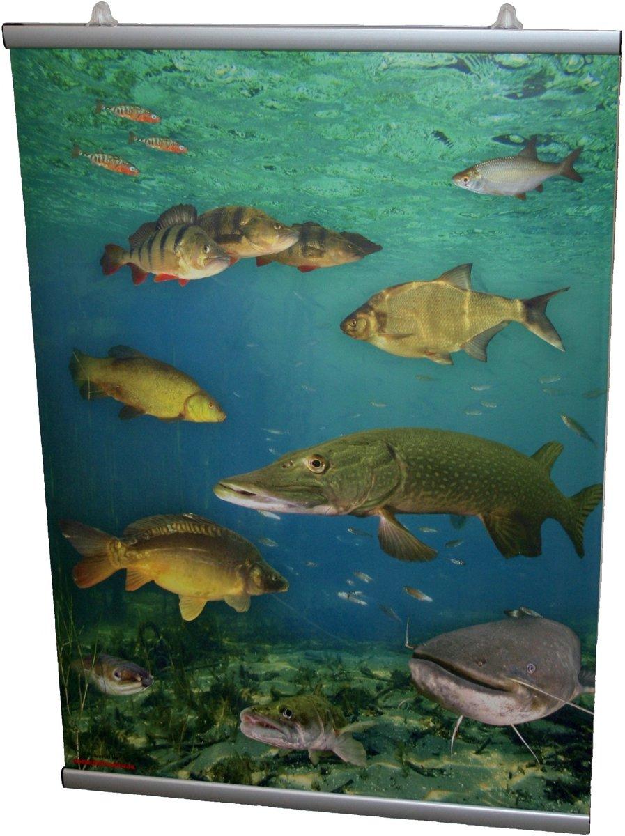 Poster Nederlandse Zoetwatervissen + Luxe Ophangsysteem - Educatieve Visposter Onderwater Vissen Natuur Karper Snoek Meerval Baars Zeelt Snoekbaars Brasem Jongenskamer Dieren Muurstickers Decoratie Kinderkamer kopen
