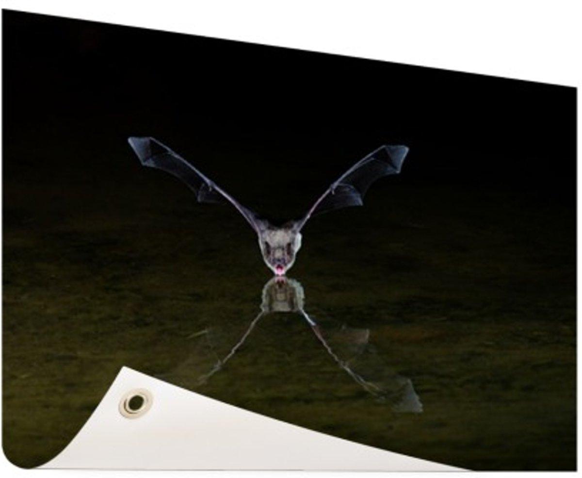 Vleermuis boven water Tuinposter 200x100 cm - Foto op Tuinposter (tuin decoratie) kopen