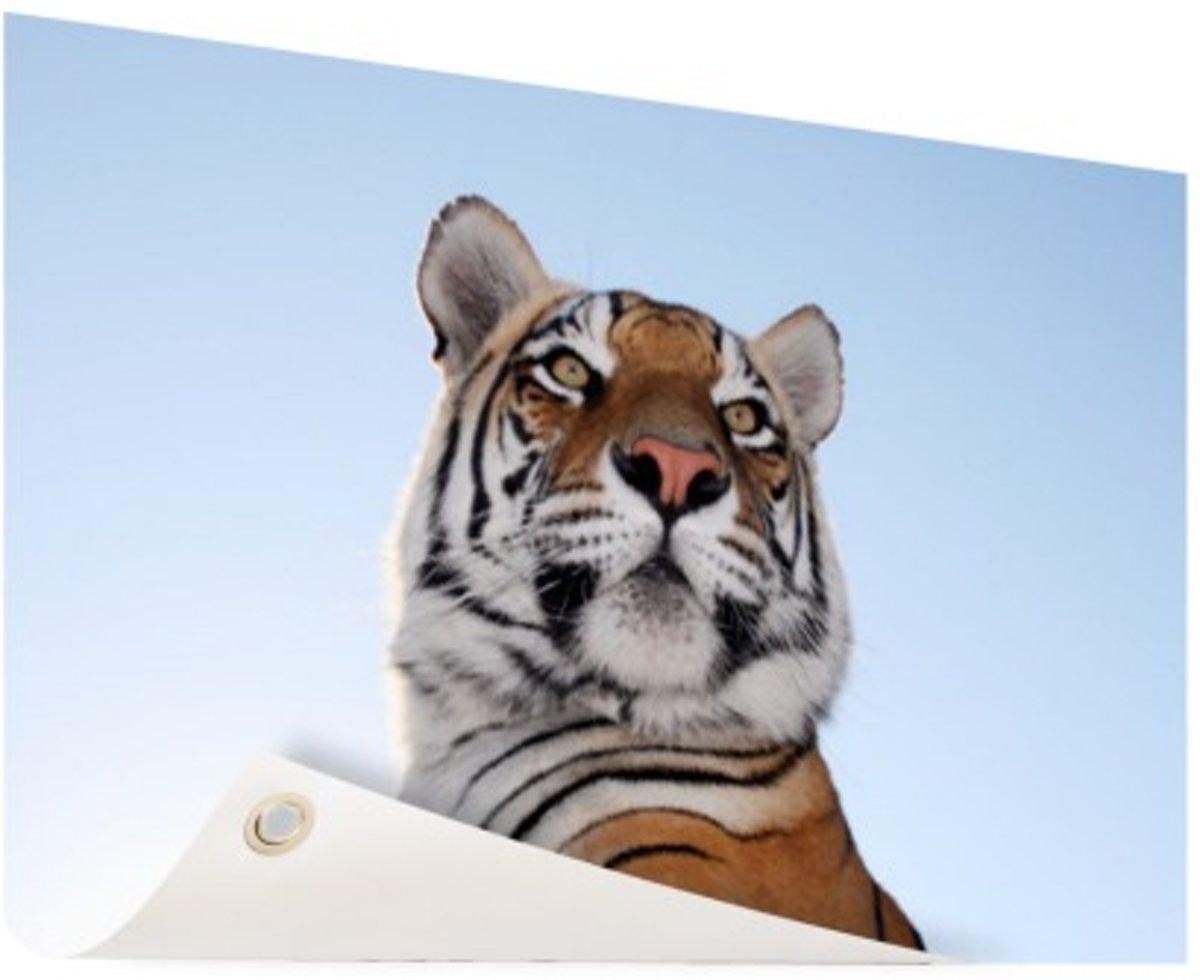Stoere tijger blauwe lucht Tuinposter 120x80 cm - Foto op Tuinposter (tuin decoratie) kopen