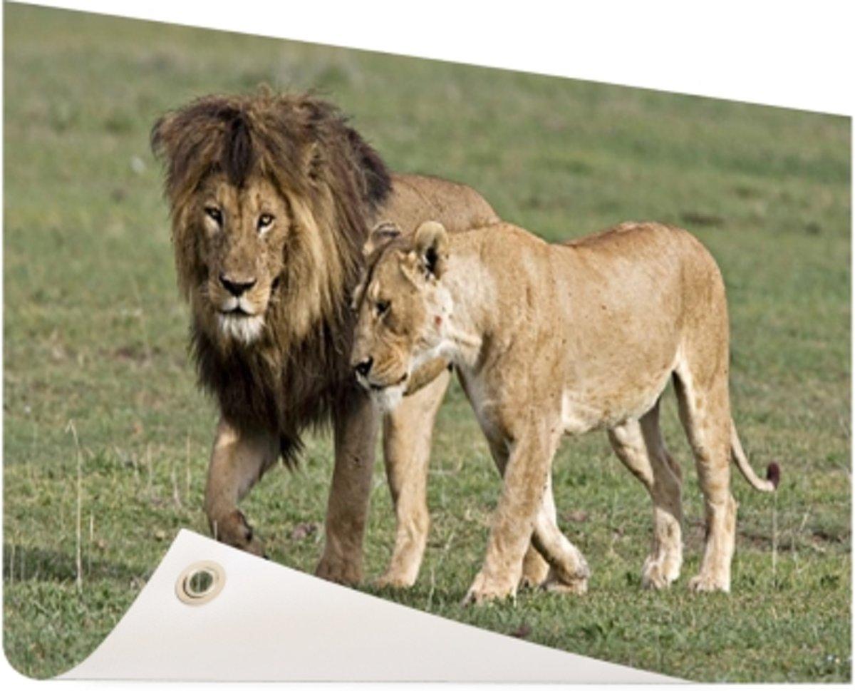 Leeuwenpaar Tuinposter 200x100 cm - Foto op Tuinposter (tuin decoratie) kopen