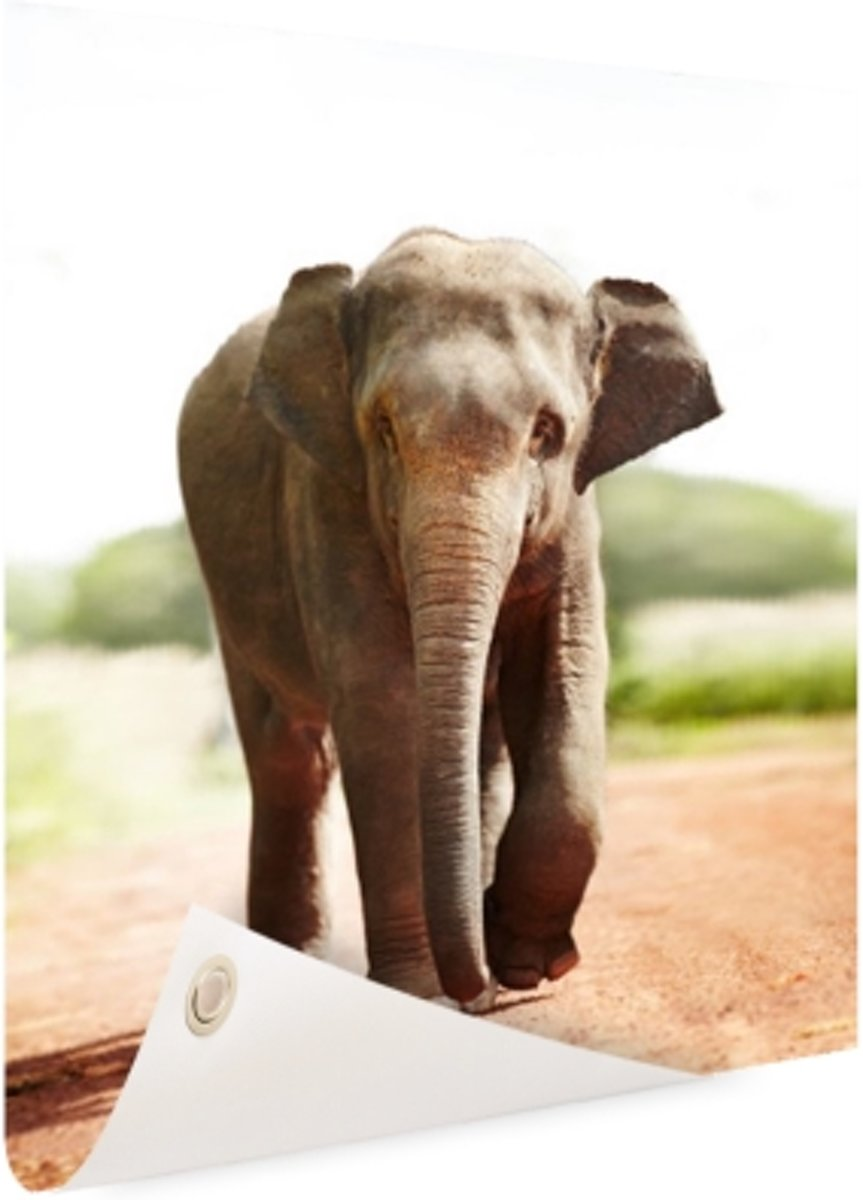 Wandelende olifant Tuinposter 100x200 cm - Foto op Tuinposter (tuin decoratie) kopen