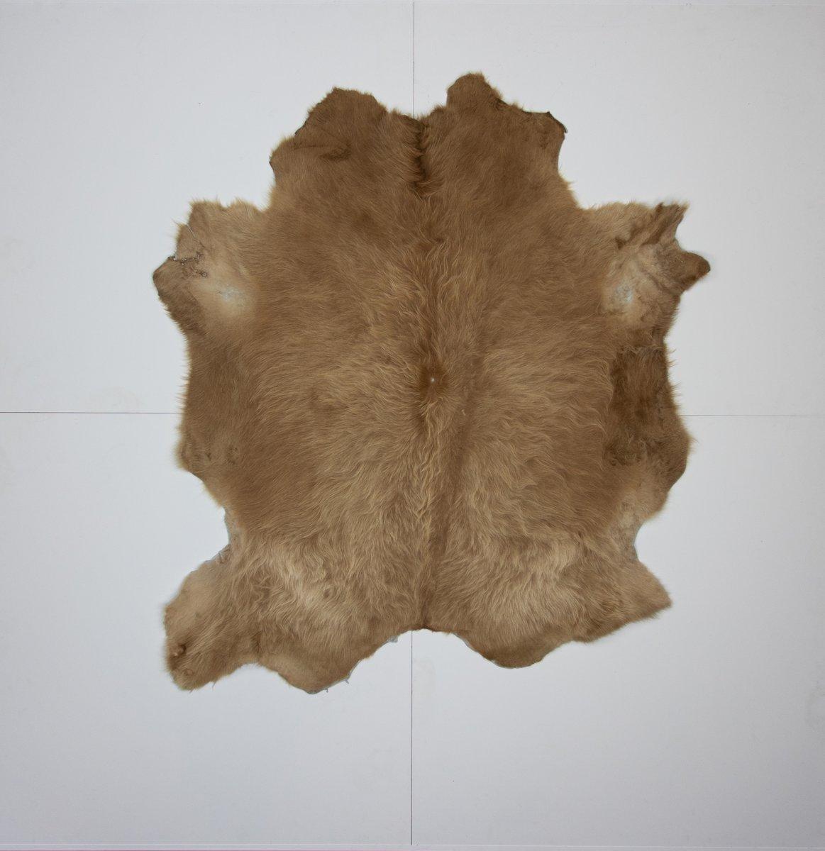 KOELAP Stierenhuid Vloerkleed - Beige Egaal - 165 x 185 cm - 1000880 kopen