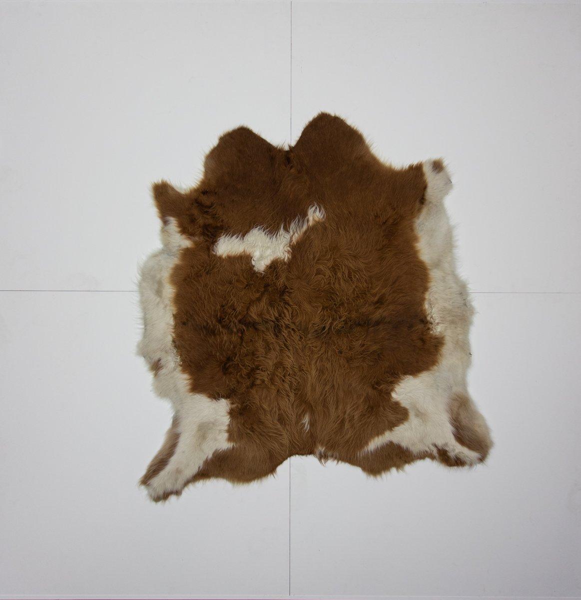 KOELAP Stierenhuid Vloerkleed - Bruinwit Gevlekt - 150 x 160 cm - 1000885 kopen