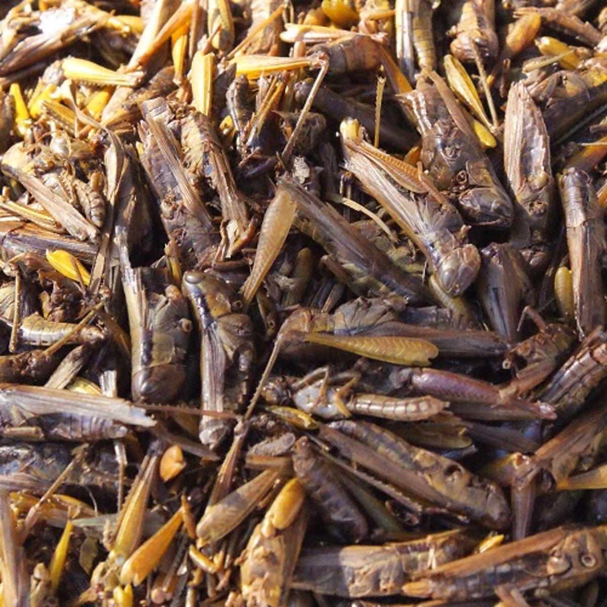 Sprinkhanen (10 Liter) - Kippenvoer