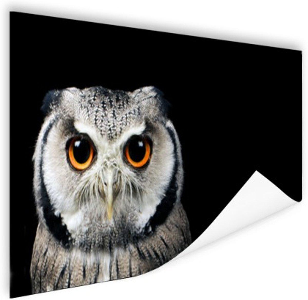 Close-up uil Poster 180x120 cm - Foto print op Poster (wanddecoratie) / Dieren Poster XXL / Groot formaat! kopen