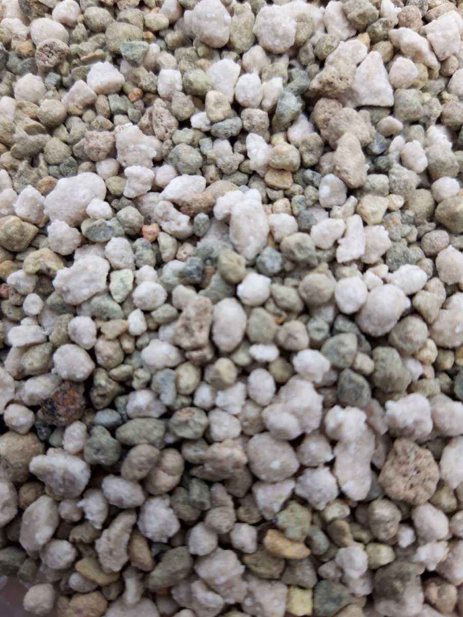 Sedum Stronger – 1 kilo voor bemesting van groendak