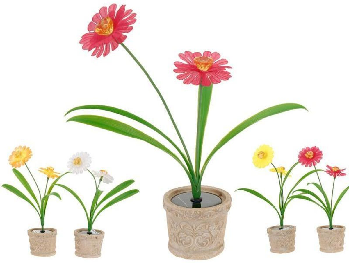 ProGarden 2 Solarbloemen in pot kopen