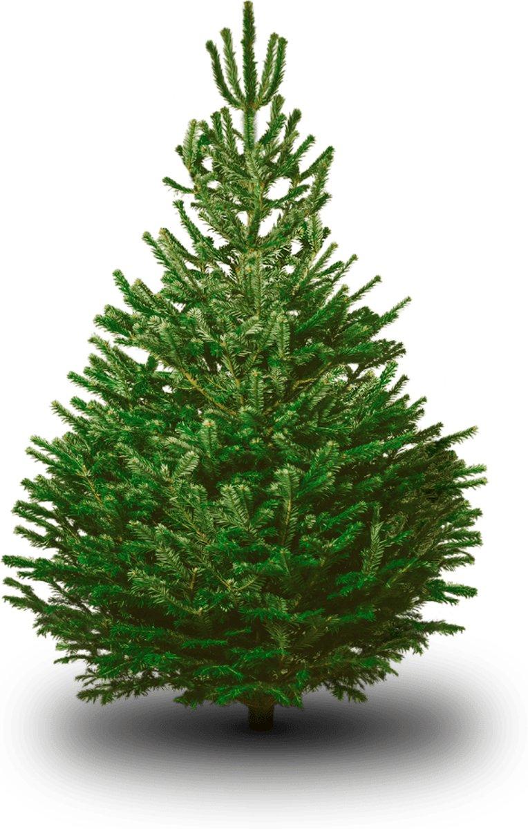 Nordmann kerstboom - 160 tot 180 cm kopen