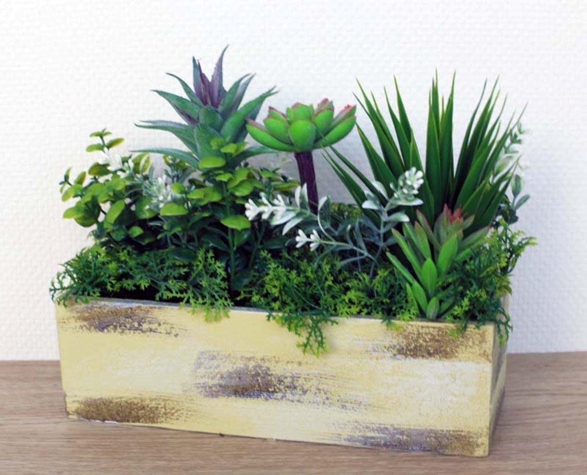 2 stuks Plantjes in bak Isa groen kopen