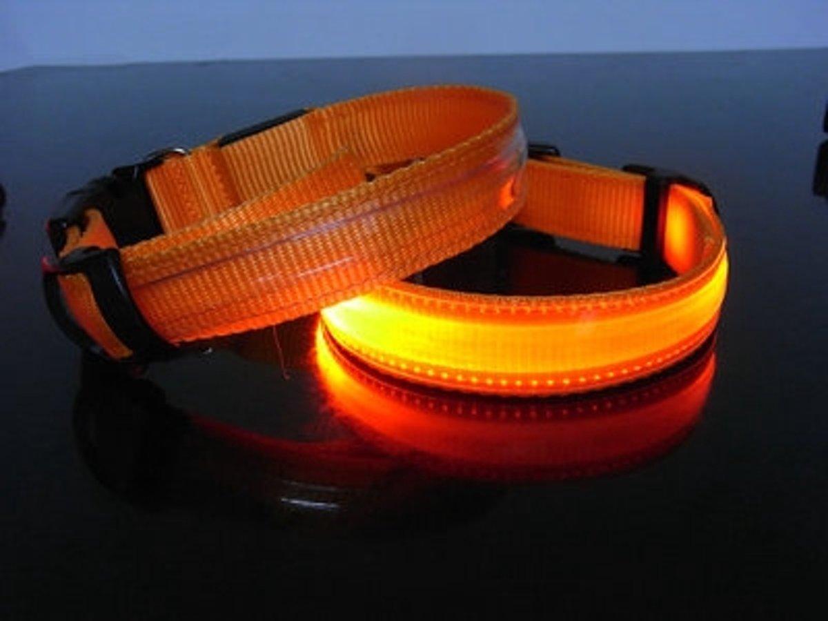 Hondenhalsband Met Licht : Led hondenhalsband oranje small cm